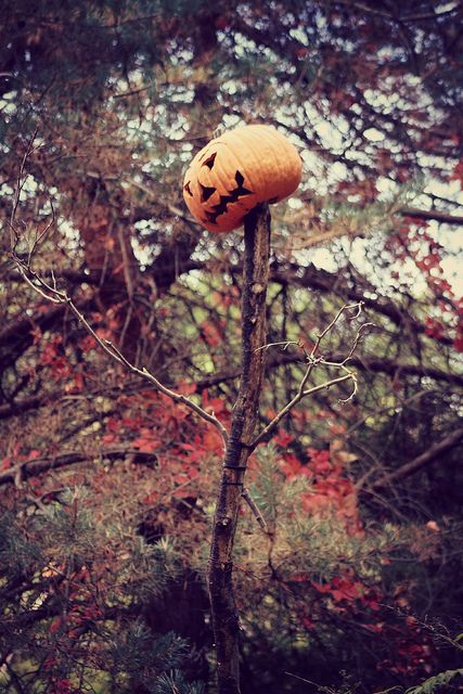 NY Botanical Garden - Haunted Pumpkin Garden | Flickr - Photo Sharing!