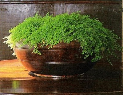 Signature Rose Tarlow  antique bowl with french polish and greens
