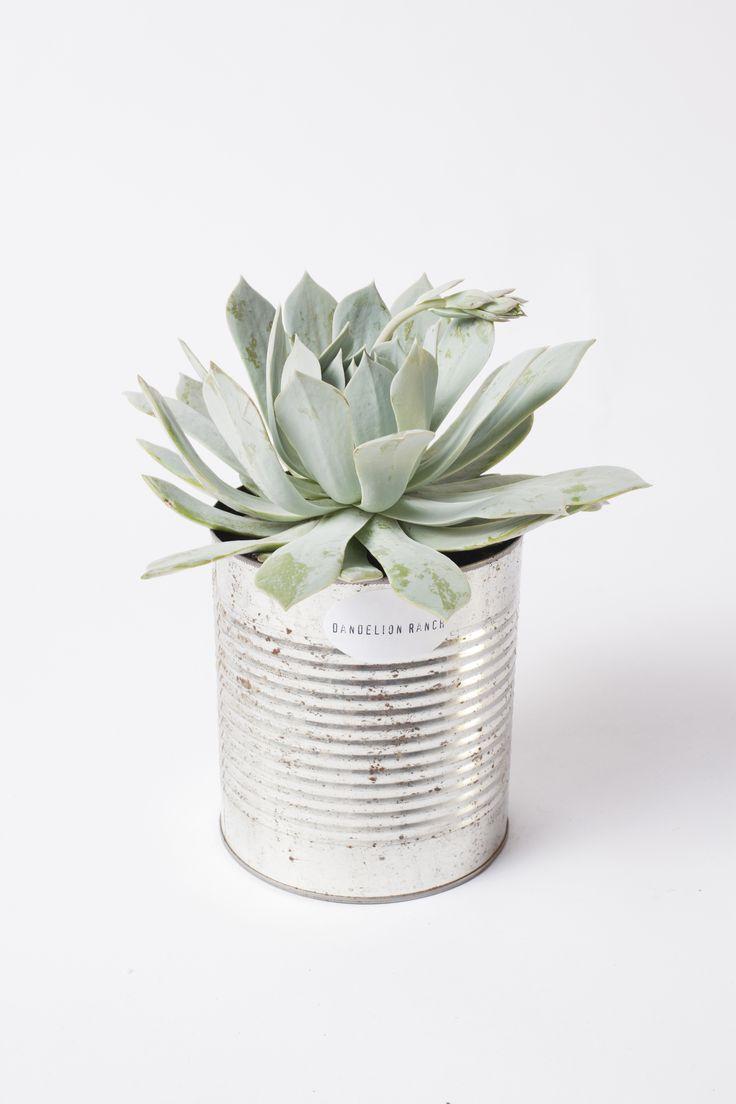 Tin Planter with Succulent // so easy as a simple decoration! Succulenten - succulents