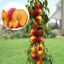 Cumpara Arbori si arbusti fructiferi in magazinul online GradinaMax - pagină 9