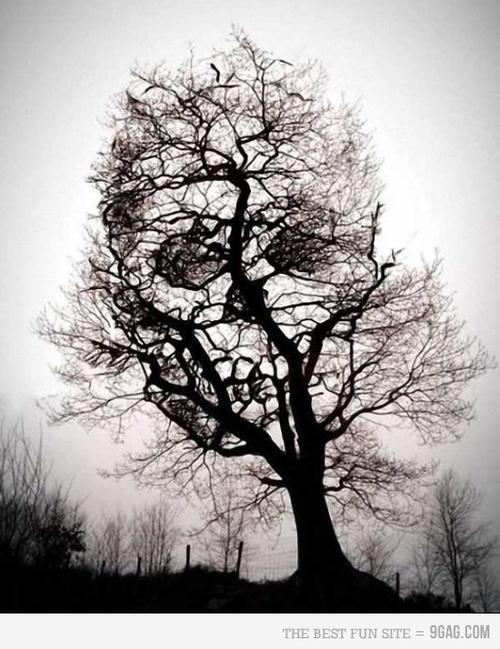 skull tree!!