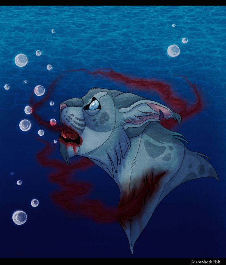 Warrior Cats Dead: 17 Best Images About Warrior Cats On Pinterest