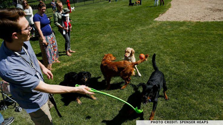 Bicentennial Park Glebe Sydney Dog Friendly Parks Petcloud