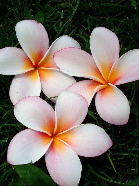 die besten 25 orchid meaning ideen auf pinterest blumentattoos sonnenblumen t towierung. Black Bedroom Furniture Sets. Home Design Ideas