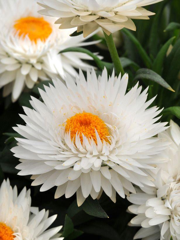 12 Best Unusual Flowers Images On Pinterest Beautiful