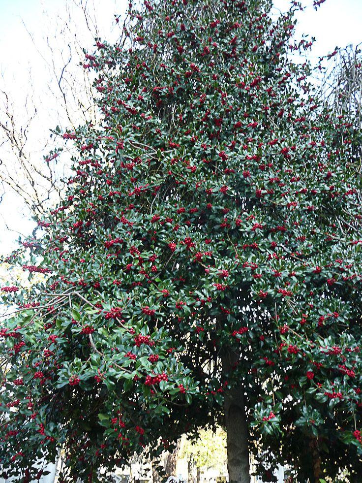 Les 25 meilleures id es de la cat gorie fleurs d 39 iris sur for Boulingrin jardin