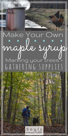 DIY Maple Syrup | How to make syrup | marking trees for syrup | failures at making maple syrup | maple sugar |  Electrolyte maple sap drink | drinking maple sap | maple syrup making supplies