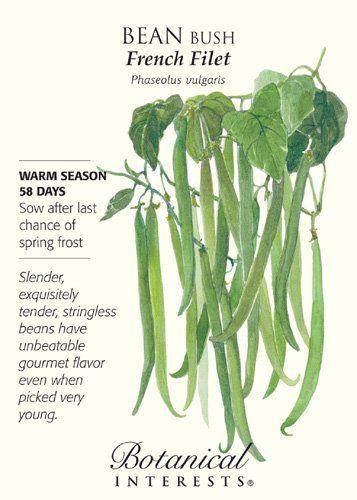 French Filet Bush Bean Seeds 20 Grams Gardening 400 x 300