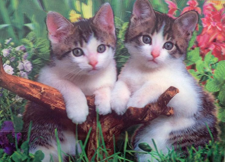 DC-37 grey and white kittens in the garden 3D picture