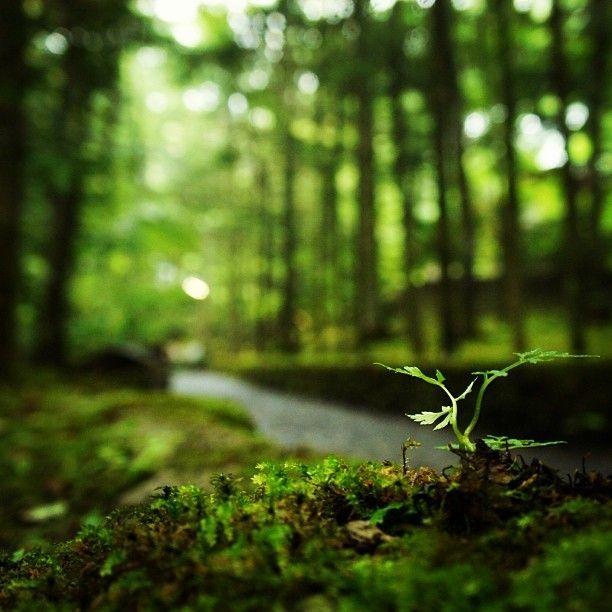 散歩にぴったり!苔むした石畳が美しい「幸福の谷」。 軽井沢の見所一覧。