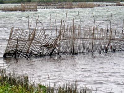 Kosi Bay - snaked mazes of fish traps