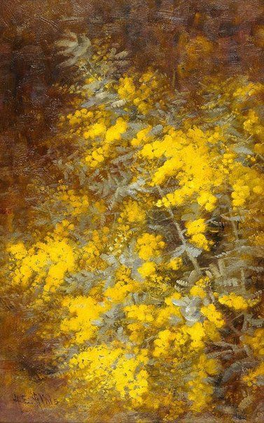 Cootamundra wattle, (circa 1916) by A.E. Aldis :: The Collection :: Art Gallery NSW