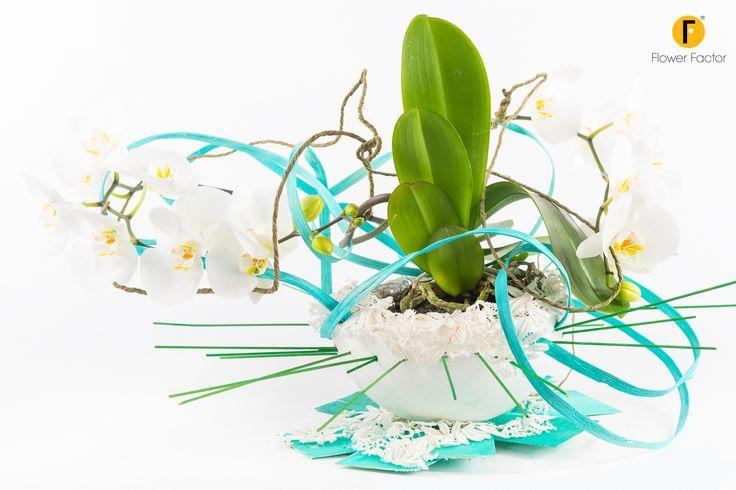 Tweetjam  #Opti-Flor #Collection #Phalaenopsis #Orchids #plant #flower #creation