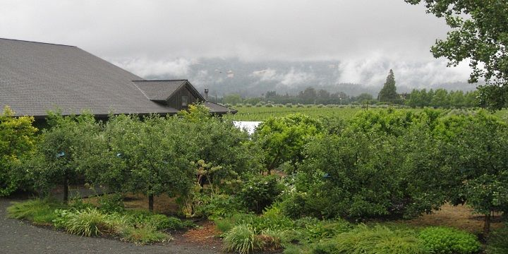 Frog's Leap Winery i Kalifornien är en av de ekologiska vingårdar med både hållbar livsstil och ett sortiment fantastiska viner.