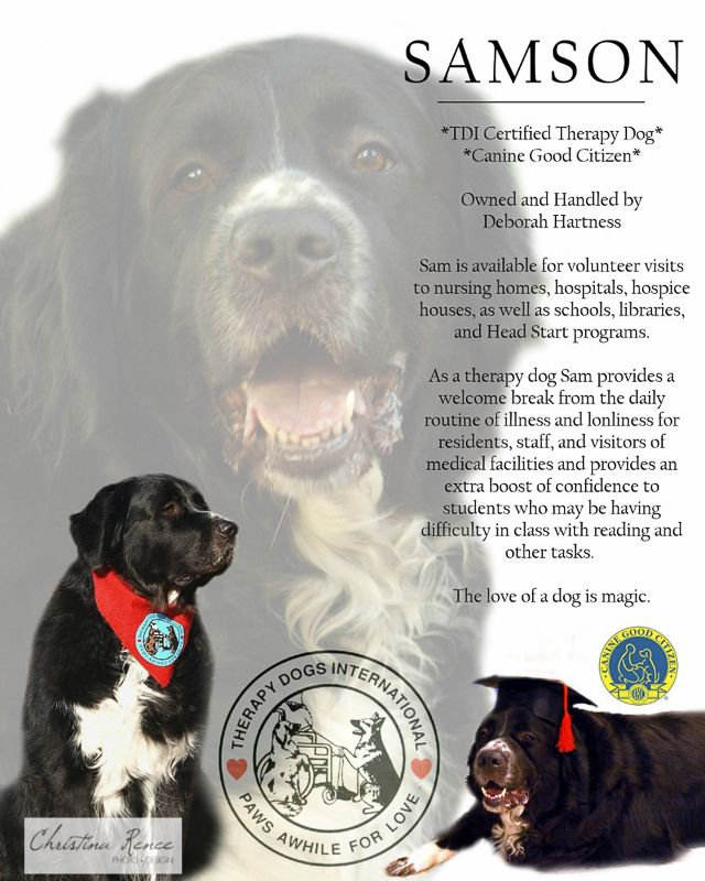 big sam therapy dog  u0026 39 resume u0026 39  photo collage