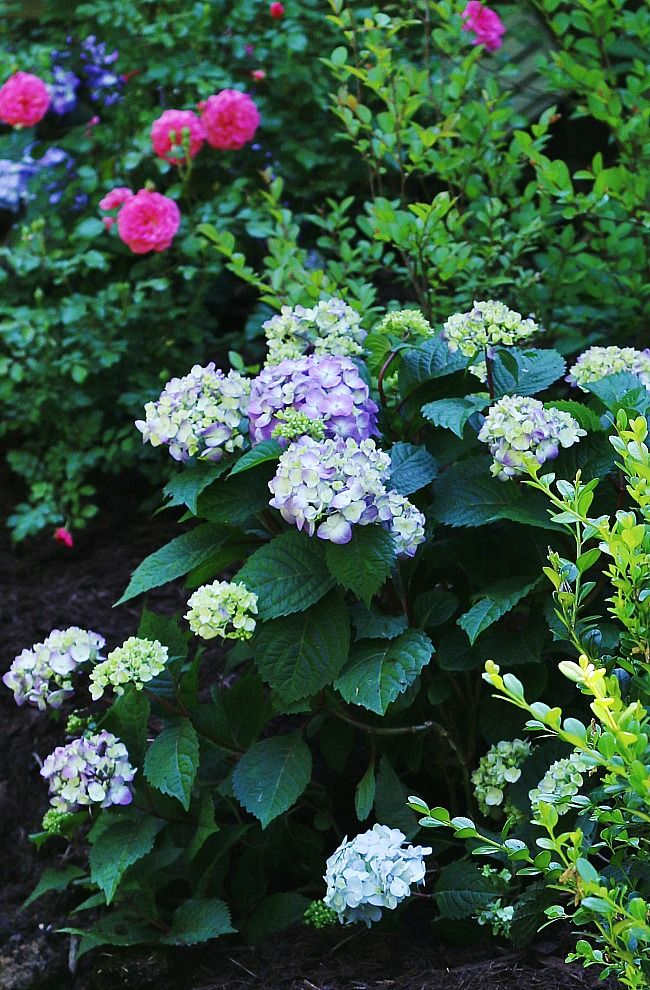 disclosure:  this post is brought to you by Endless Summer ® Hydrangeas. At the back of the house, around the corner from the meadow and the hay bales is a tiny garden path with round stepping stones that leads to the side yard. It kind of gets forgotten. The flower bed is overgrown and a little …