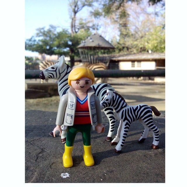 Paseando con las cebras #Barcelona #clicks #zoo #playmobillovers #playmobilbarcelona #playmobil #playmobilporelmundo #play #playmobilespaña #playmobilworld #playmobillove #playmobilcatalunya #infobarcelona #igerscatalunya #igersbarcelona #insta_baltanas #igerscatalonia #izt_miniature #veterinarios