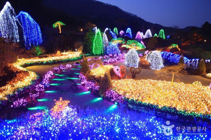 빛으로 가득한 정원에서 보내는 아름다운 겨울밤, 가평 아침고요수목원 오색별빛정원전