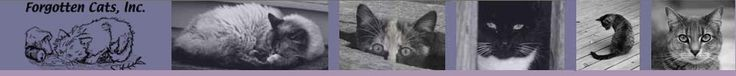 Forgotten Cats Website. They care for ferals and take in non-feral strays.