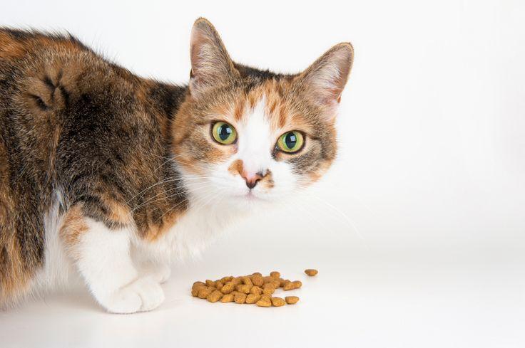 Cibo per gatti fatto in casa, sano e low cost