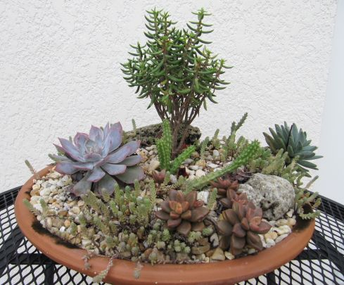 Succulent Dish Garden Ideas how to make an indoor succulent planter add life and beauty to your interiors with Another Succulent Dish Garden