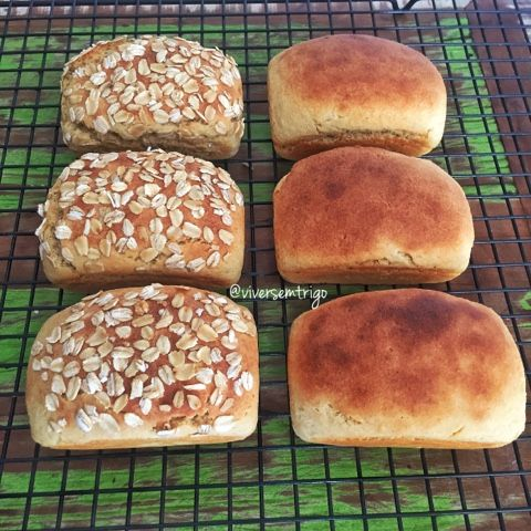 VIVER SEM TRIGO: Pão de Aveia