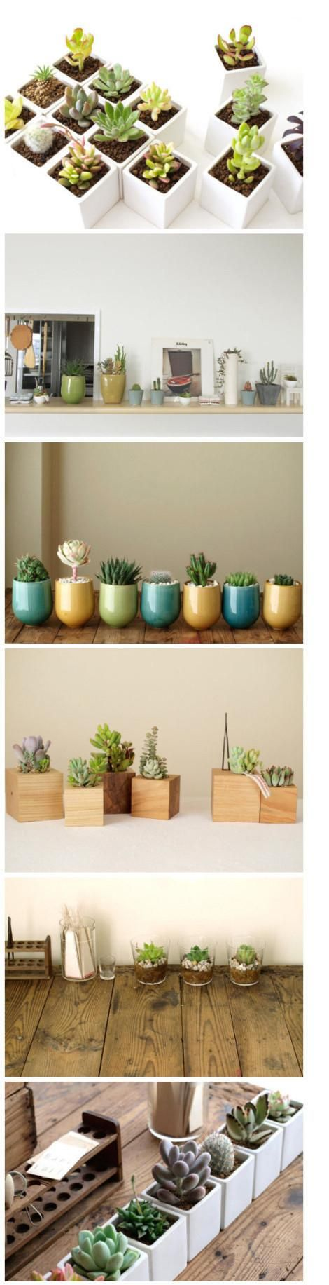 Cute succulent potting ideas.