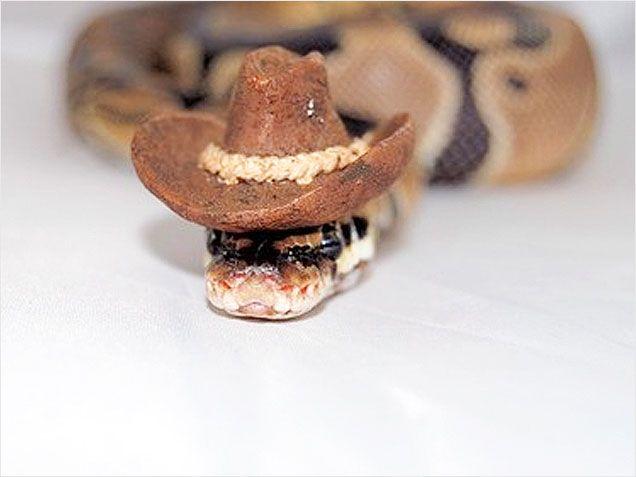 1e5ee8ce5efe465fec72d43694d208f2--snakes