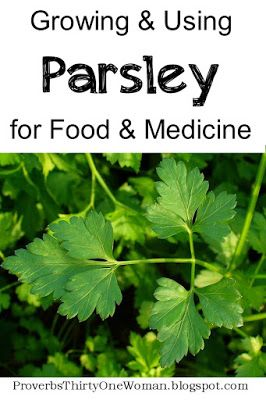 Growing and Using Parsley for Food and Medicine