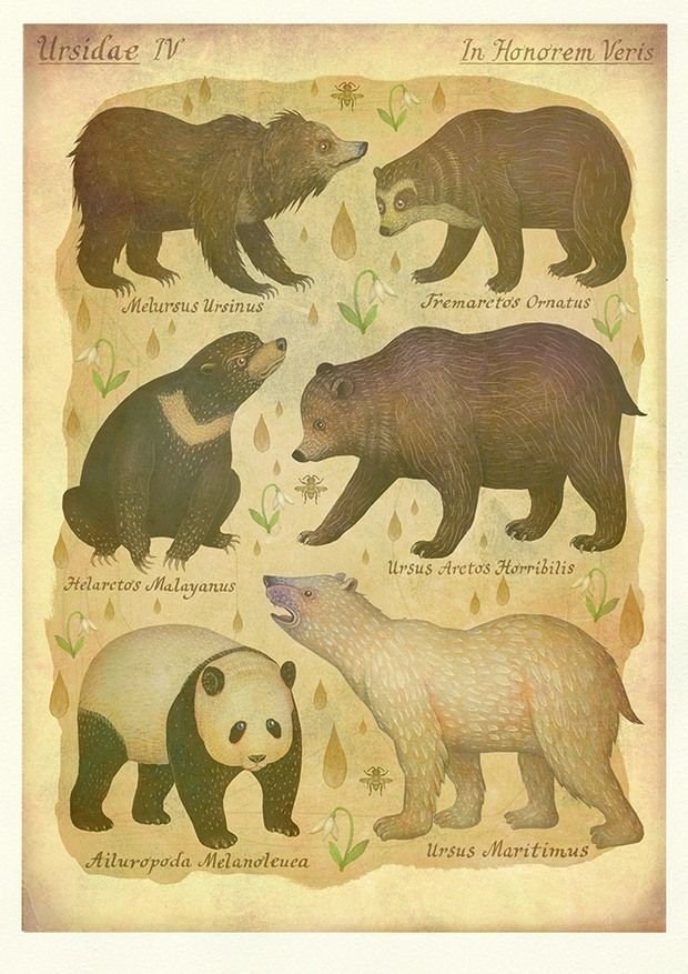 Bears - In Honor of Spring by Vladimir