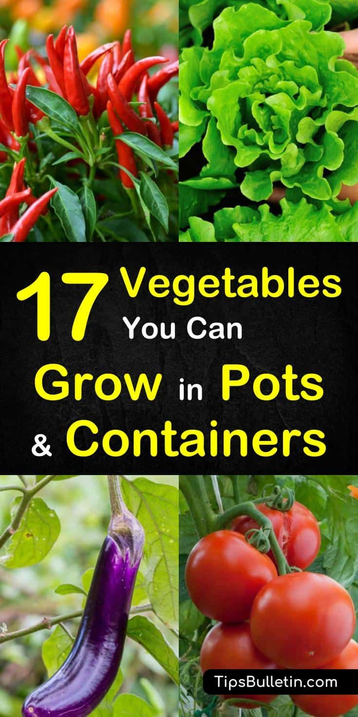17 Vegetables That You Can Grow In Pots And Containers Container