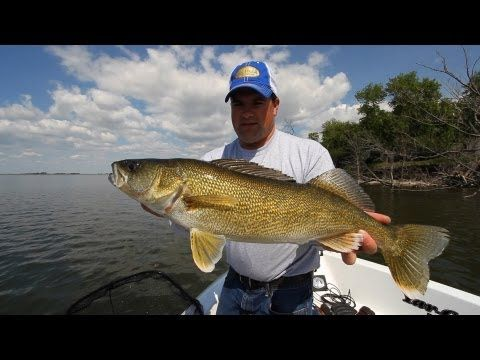 100 best images about walleye on pinterest lakes pike for Slip bobber fishing