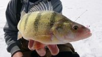 Lac des Mille Lacs and Black Bay, Two Ice Fishing Hot Spots Close to Thunder Bay