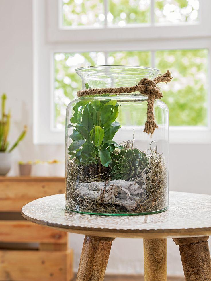 vase avec plantes et d cors plantes grasses terraria and plants. Black Bedroom Furniture Sets. Home Design Ideas