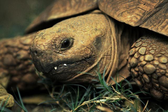 20 Best Tortoise Images On Pinterest Tortoise House