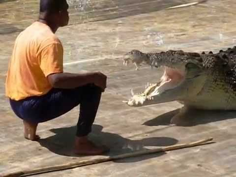 Heart Throbbing #Crocodile Show at Langkawi #Malaysia