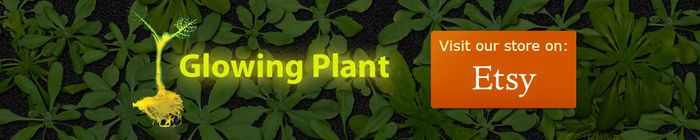 Glowing Plants: Natural Lighting with no Electricity by Antony Evans — Kickstarter