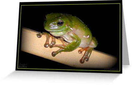 """Oh yes, here is another froggy shot. Just can't help it. This can be part of """"Froggies on the Front Rail"""" set. :)  ... And all the more froggies to choose from.  Enjoy."""