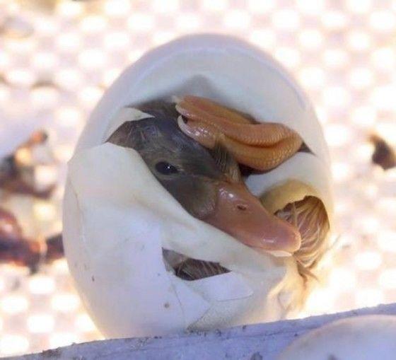 dieren uit een ei
