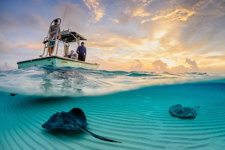 SENSE OF PLACE - Stingray Split - Years ago, fisherman would dump their scraps overboard at this location, as they came into harbor. The southern stingrays (Dasyatis americana) pictured soon learned about this free meal and have congregated there in large numbers