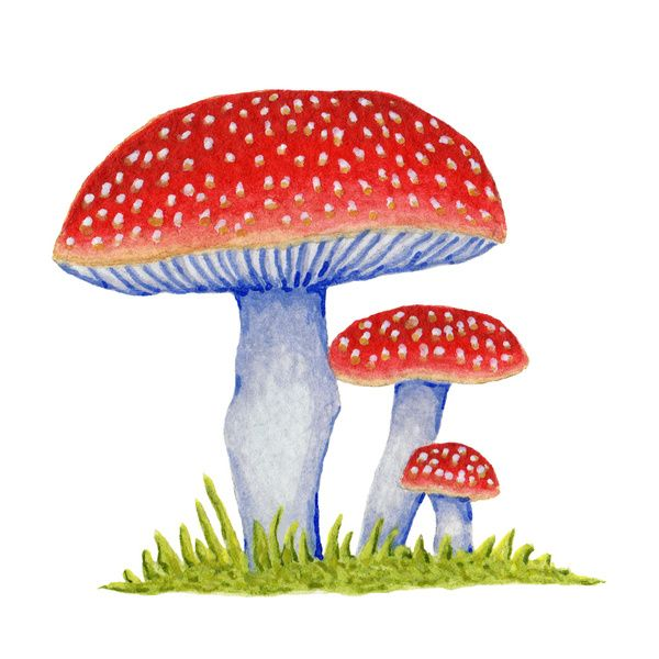 Woodland Toadstools Art Print by Isobel Woodcock ...