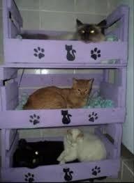 Resultado de imagen para cucha de perros o gato de cajon de manzana