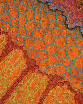 Fiber Art, by Betty Busby. Love how the colors play with their neighbors, AND the added texture.