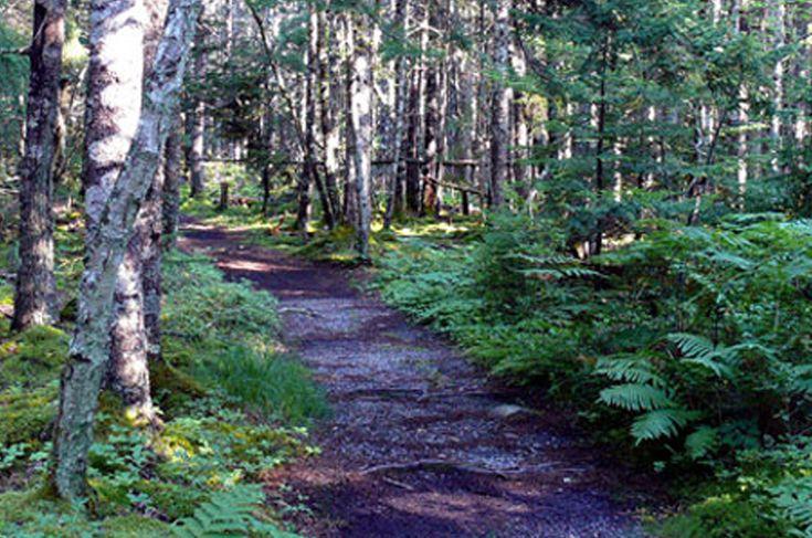 Chebogue Meadows Wildlife Interpretive Trail — 4.5km woodland and riverside trail in Yarmouth, Nova Scotia