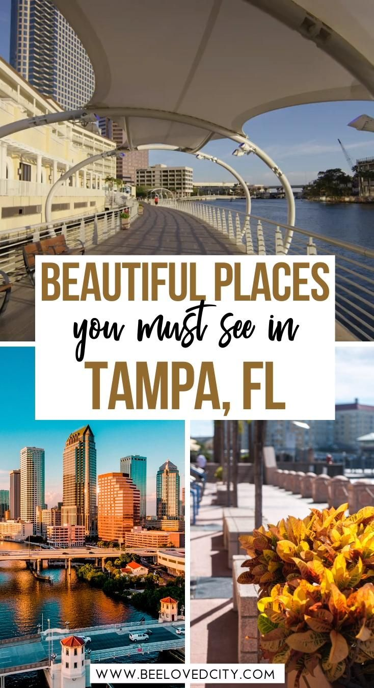 Discover the most beautiful places in Tampa Florida. From the riverwalk to Ybor city, we tell you everything about the best things to do in Tampa Florida. This includes things to do in Downtown Tampa but also day trips such as Busch Gardens. Tampa Florida | Tampa Florida things to do in | Tampa Bucket List | Fun things to do in Tampa Florida | Tampa Florida travel guide | Tampa Florida travel itinerary | Tampa Florida vacation | Tampa Bay Travel guide | Tampa Florida beaches