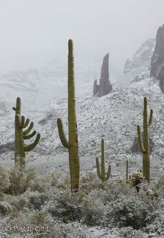 Snow -the Sonoran Desert, Arizona