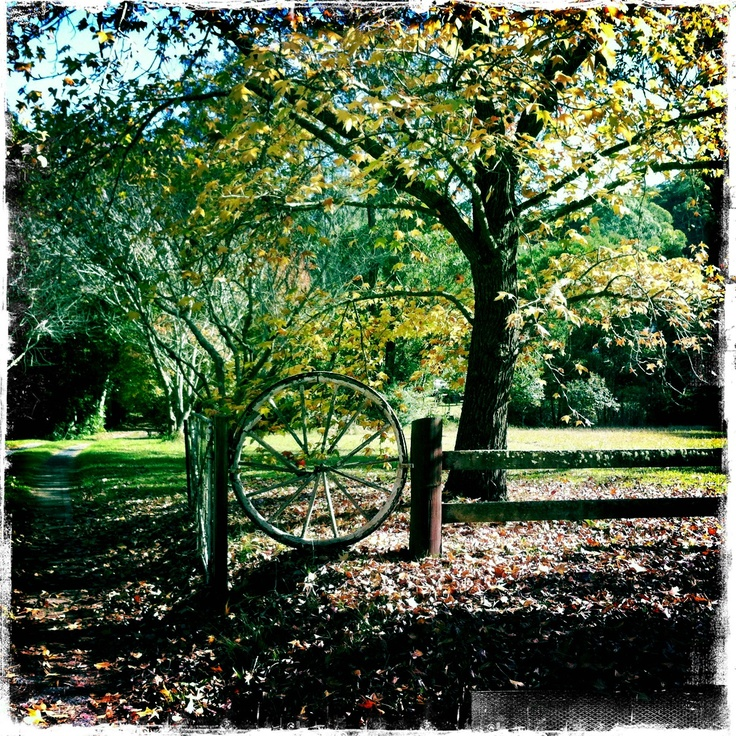 Oak Rd, Matcham (1)