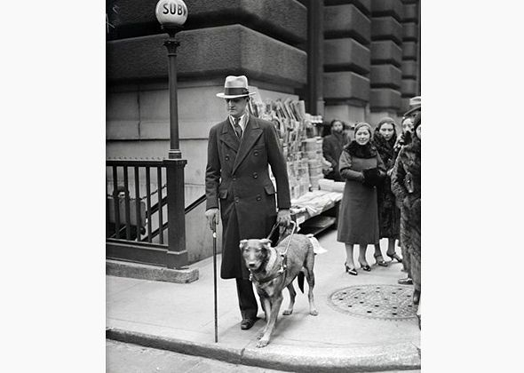 """""""Buddy"""" Fortunate Fields made history in 1928, when he became the first seeing eye guide dog in the U.S. He made her worldwide debut with her handler Morris Frank in New York City, when Frank surprised reporters by stepping off the curb to cross West Street and he and Buddy safely reached the other side. Morris later helped found The Seeing Eye, the oldest existing guide dog school in the world."""