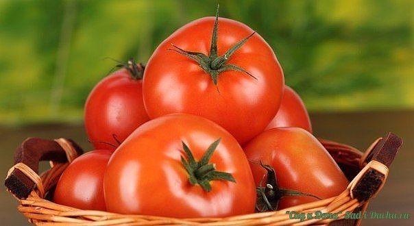 КАК ЗАСТАВИТЬ ТОМАТЫ КРАСНЕТЬ Задача по ускорению покраснения томатов поставлена многими огородниками из-за прохладных ночей, из-за туманов и из-за утренних рос! Итак, рассмотрим несколько способов ускорения созревания томатов!!!  1.Два дня подряд нужно полить наши кусты розовым раствором марганцовки и через недельку они начнут массово краснеть !  2.Так -же, результаты дает опрыскивание помидорных кустов раствором йода.На 10 литровое ведро с теплой водой взять 30-35 капель аптечной настойки…