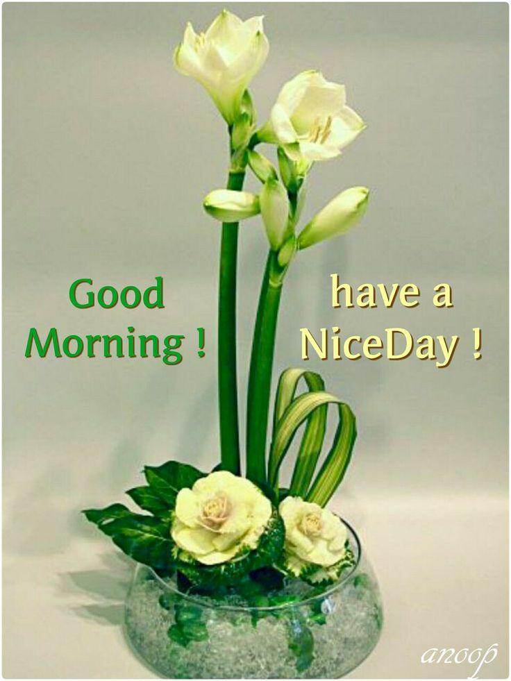 Good Morning Sunday Kiss Images : Best good morning images on pinterest